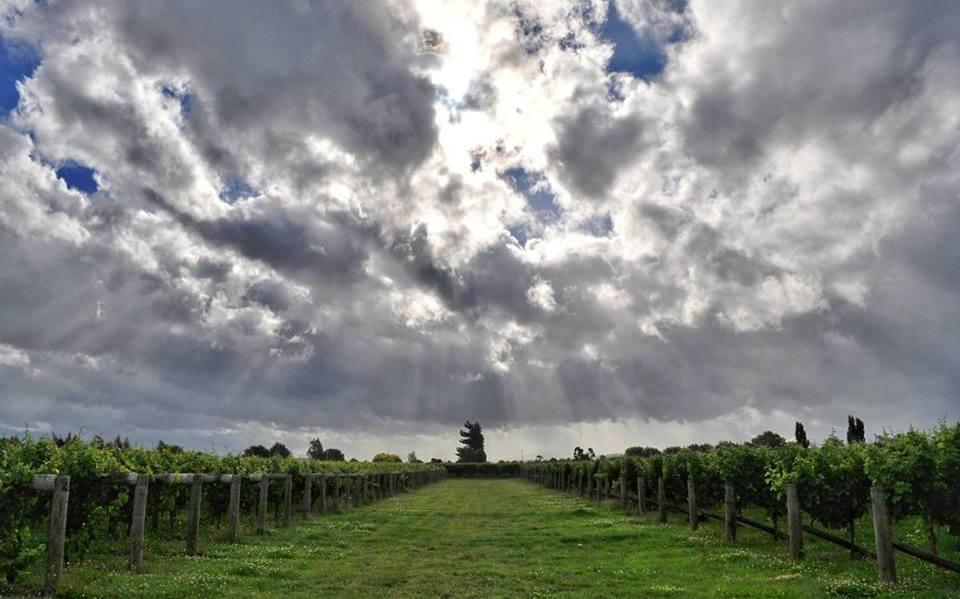 vineyard-shot-alt